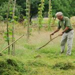 Rural Life Weekend: English Scything