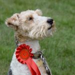 Friends of Buchan Country Park: Dog Show
